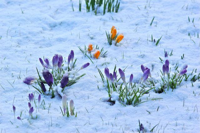 Später Schneefall