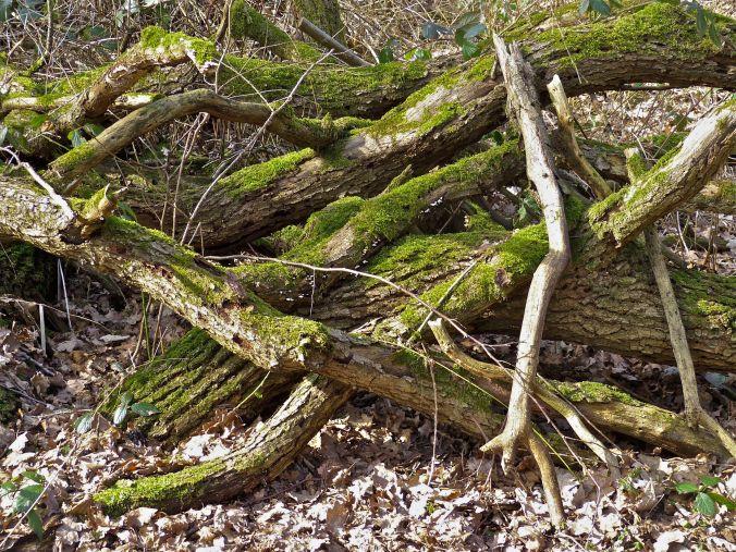 Holzhaufen