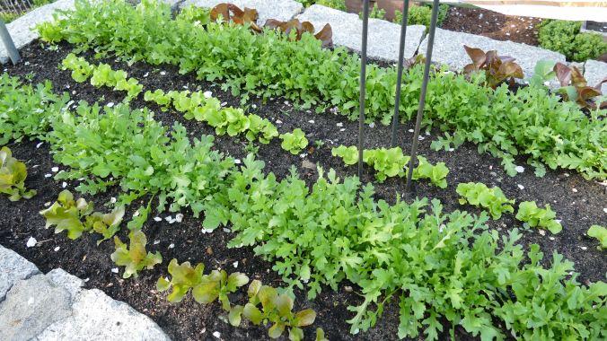 Gemüsebeet