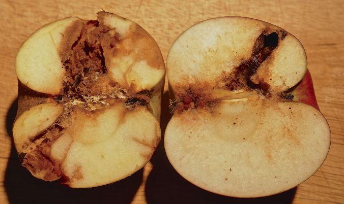 madiger Apfel